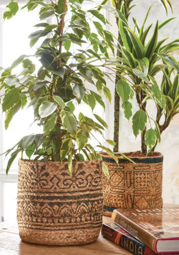 two jute plant holders
